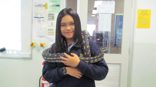 Student with snake wrapped around her in International Student Program at Brighton Secondary School
